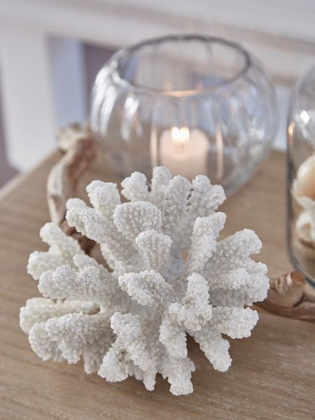 Curvy Sea Coral Decoration Decorative Coral Nordic House