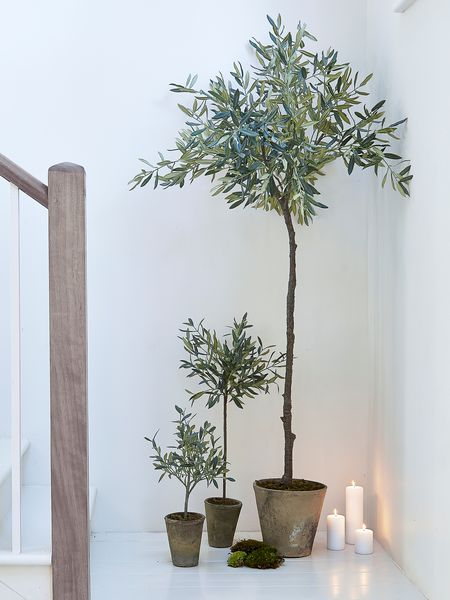 Faux olive trees - Nordic House