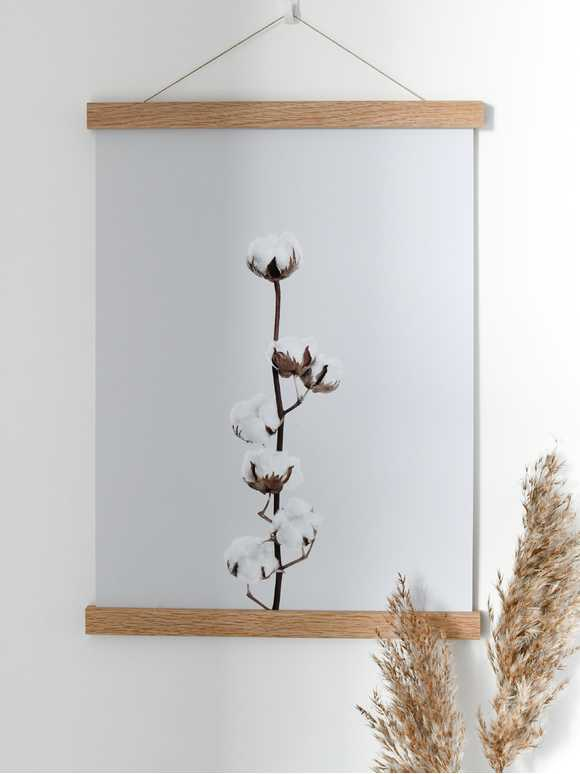 Cotton Flower Bud Poster